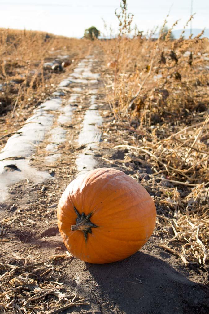 fall-activities-19