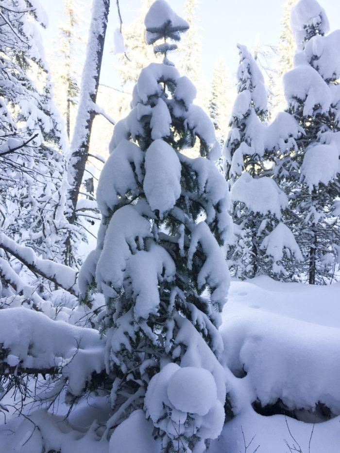 snow-hike-in-utah_10