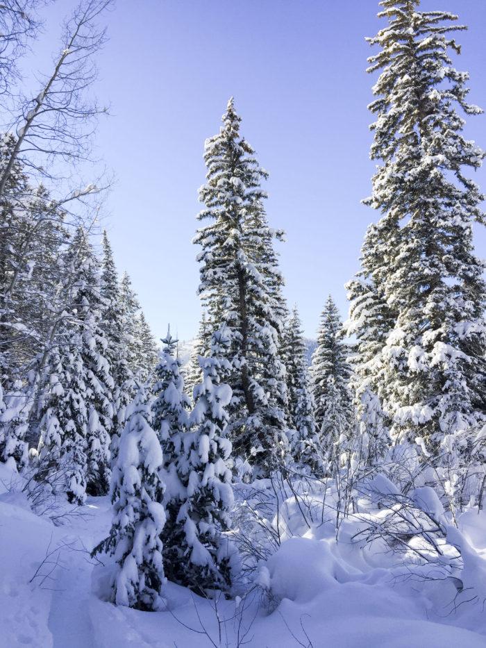 snow-hike-in-utah_26