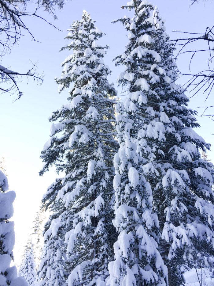 snow-hike-in-utah_7